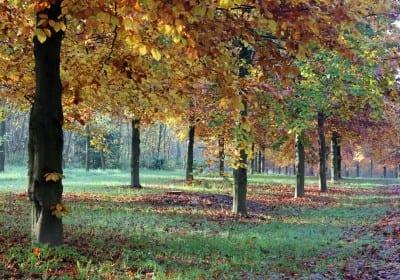 Natuurgraf in de herfst