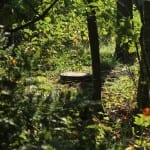 Natuurgraf met boomschijf